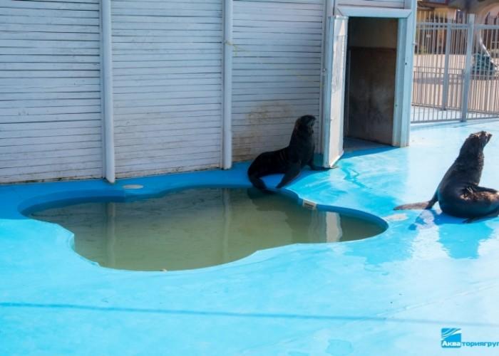 Открытый бассейн в минском Дельфинарии (Минск)